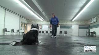 Dog Obedience Training: Working Hand Signals