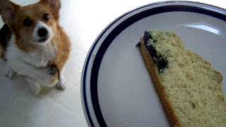 "Yassy's Gourmet Dog Kitchen; ""palette"" And  Peanut Butter Blueberry Pupcake Ii"