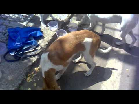 Me Feeding Stray Puppies At About 2 30pm  On 16th April 2016