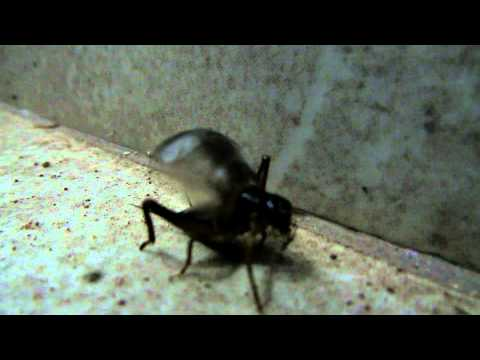 cricket chirping night insect sound