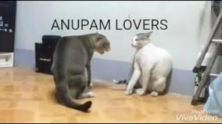 FUNNY ASSAMESE CAT DANCE IN BIHU SONG!!!😂