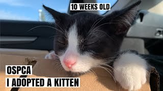 Driving 3 hours to pick up my cat OSPCA   I adopted a cat during quarantine AdoptDontShop   CNDVLOG5