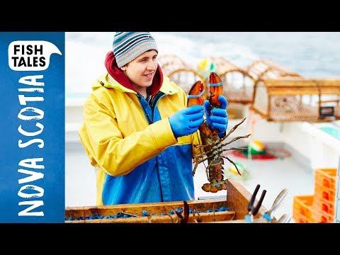 Sustainable LOBSTER Fishing in Nova Scotia | Bart van Olphen