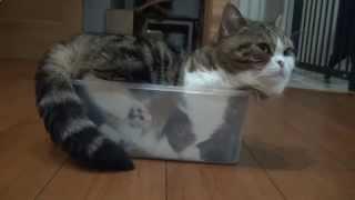 Видео про кошек 2015 - Смешная Кошка в пластиковой коробке!
