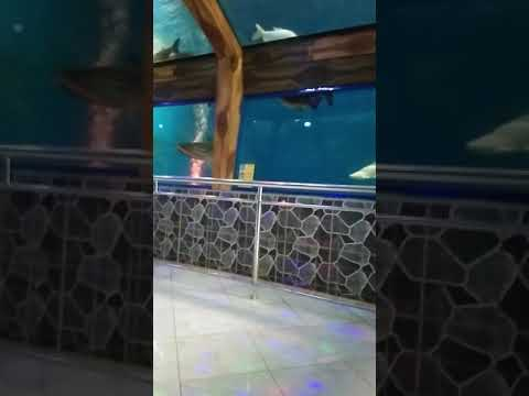 aquarium-raksasa-purbasari-purbalingga