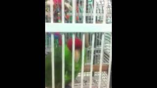 New large bird room