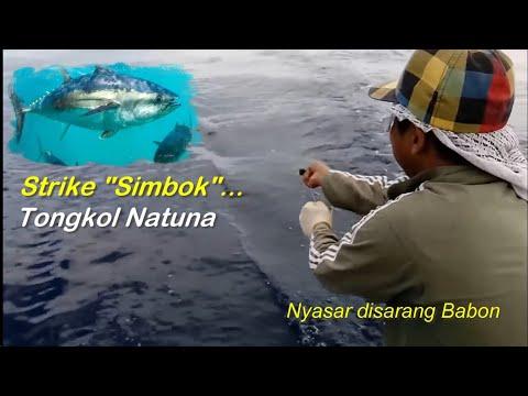 Mancing Ikan tongkol Natuna