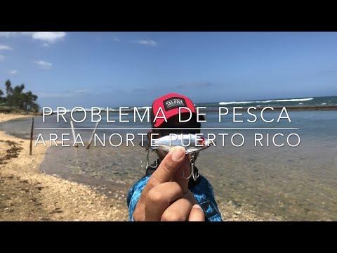 PROBLEMA DE PESCA AREA NORTE PUERTO RICO