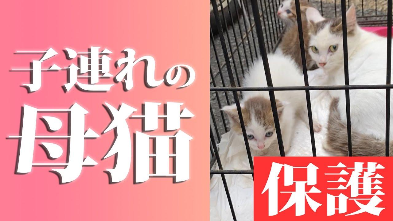 【母猫保護】埼玉県三芳町で2匹子猫を連れた猫家族を保護#171