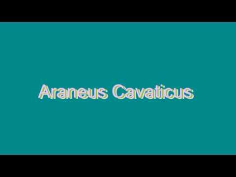 How to Pronounce Araneus Cavaticus