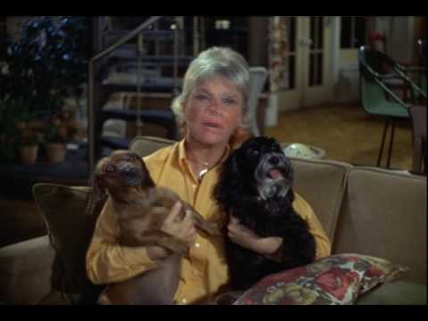 Why we should remember Doris Day as an animal advocate