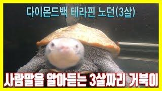 사람말을 알아듣는 3살짜리 거북이