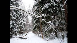 Andy Feelin - Зимний лес (школьное сочинение с музыкой)