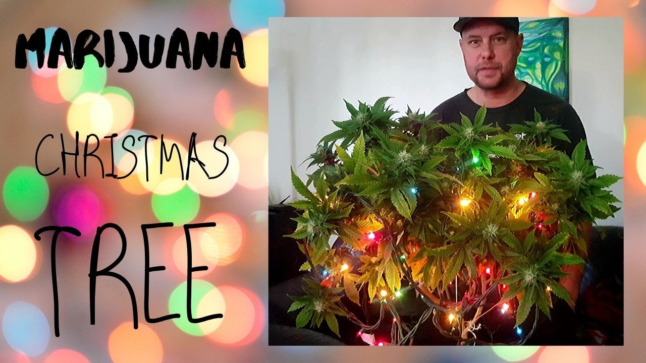 Christmas Cannabis Tree The canadian way