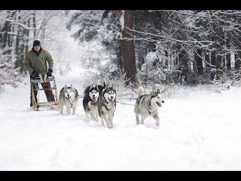 L'hiver - Jacky Galou