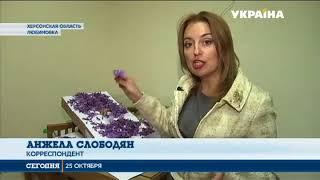 Житель Херсонской области выращивает шафран