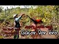 Mikat Burung Kali Ini Dapat Kolibri Sepah Raja Gacor Dor The King S Sepah Hummingbird  Mp3 - Mp4 Download