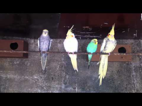 CRIANDO OS PETS 🐱🐶 | The Sims 4 Gatos e Cães | Dimissauro from YouTube · Duration:  29 minutes 44 seconds