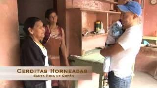 UTV Reportaje: Cerditas Horneadas de Sta.Rosa de Copán
