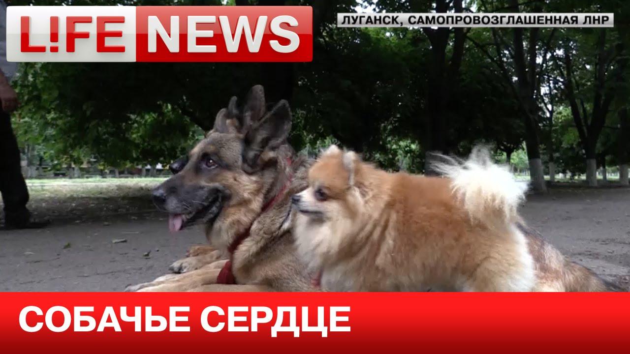 новости днр видео ютуб