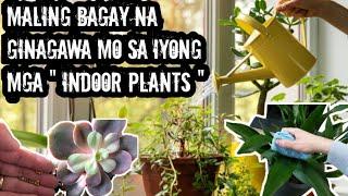 Huwag Gagawin Ang Mga 5 Bagay Na Ito Sa Iyong Indoor Plants Dahil Masama Ang Magiging Resulta| Lei M