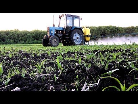 Гербицид на кукурузу от злаковых и двудольных сорняков.  #СельхозТехникаТВ