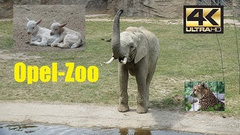 Visit Opel-Zoo Frankfurt 2018 4K