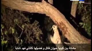 اخر النهار - محمود سعد يعلق على مذبحة الكلاب بالأسكندرية