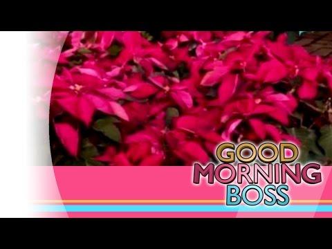 [Good Morning Boss] ETC: Poinsettia flower [11|26|15]