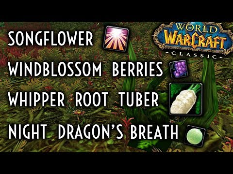 WoW Classic Guide - Whipper Root Tubers/Songflowers/WIndblossom Berries/Night Dragon's Breath