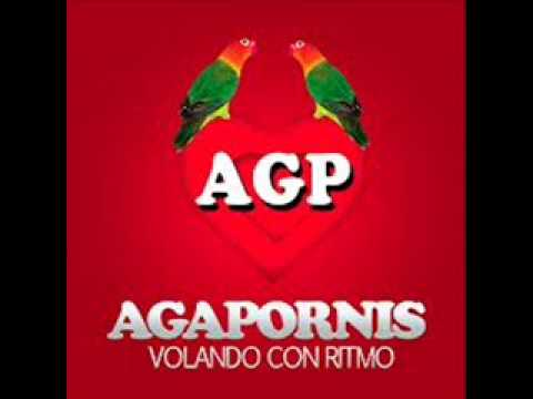 Agapornis - Someone like you (Con letra).