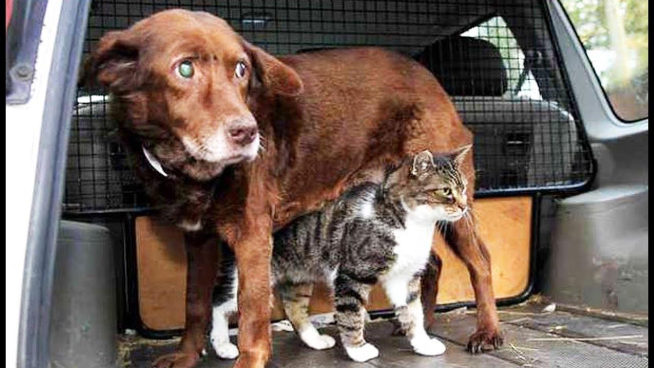Un chat devient guide d'un chien aveugle - ZAPPING SAUVAGE