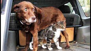 Un chat devient guide d