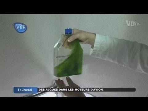 Des algues dans les moteurs d'avion (Val d'Oise)