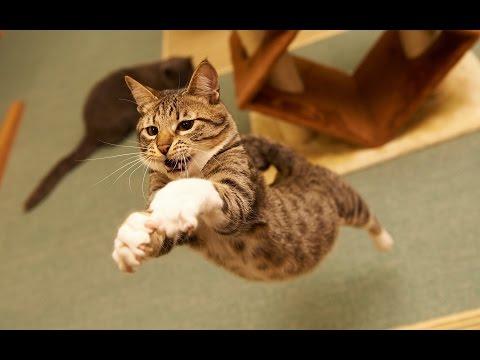 Funny Cats Jump Fails Compilation [NEW]