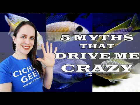 5 African Cichlid Myths That Drive Me Crazy