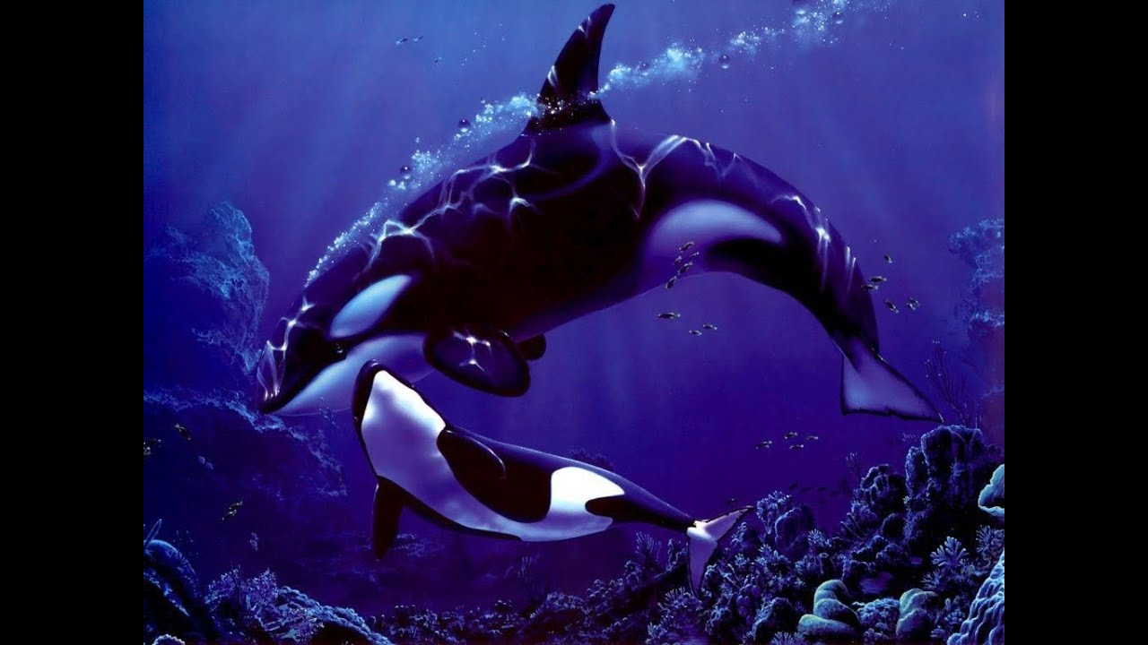 Killer whales are struggling to hear each other in the pacific killer whales are struggling to hear each other in the pacific ocean youtube altavistaventures Image collections