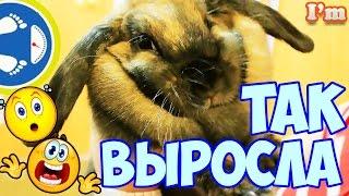 ДОМАШНИЙ КРОЛИК и стоит ли покупать кролика Как ухаживать и чем кормить кролика Как вырастает кролик