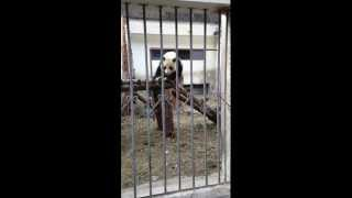 Pandas in Wolong