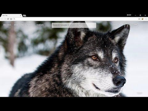 Обои Волки для Google Chrome.