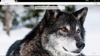 "Обои ""Волки"" для Google Chrome."
