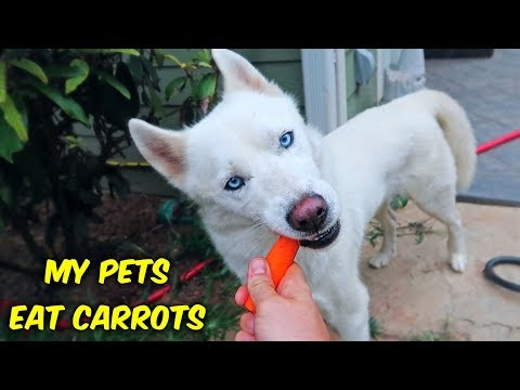 My Pets Eat Carrots