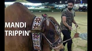 Trippin' at Mandi 2017