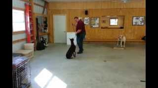 Ptsd Dog Training Of Liberty The Dog