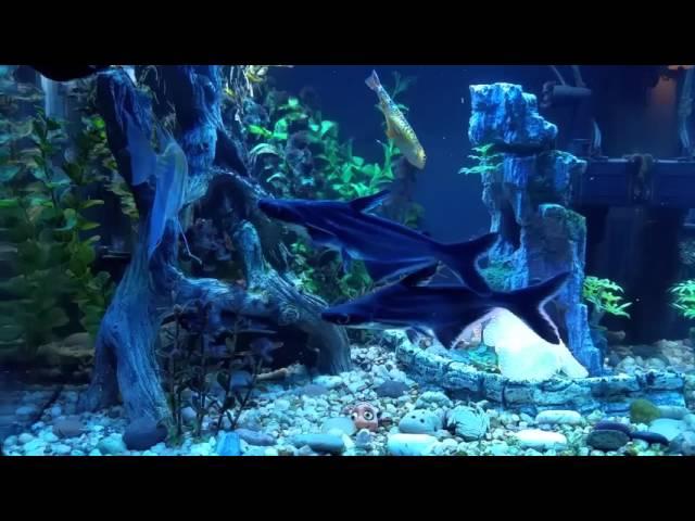 Best Aquarium Decorations Rocks Plants And Accessories Heavy Com