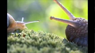 A Magical Fairytale World Of Snails - 3