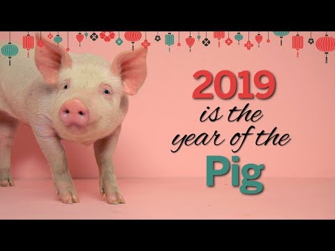 Chinese New Year: The Year of the Pig