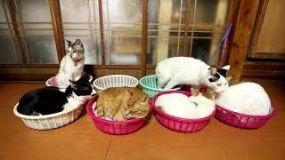 寝姿耐久猫カゴダービー、1着本命2着は混迷