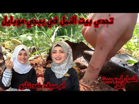 تحدي بيت النمل  🐜🐜 ) ام سيف ضد نانو مع تفجير بكاجات ببجي موبايل
