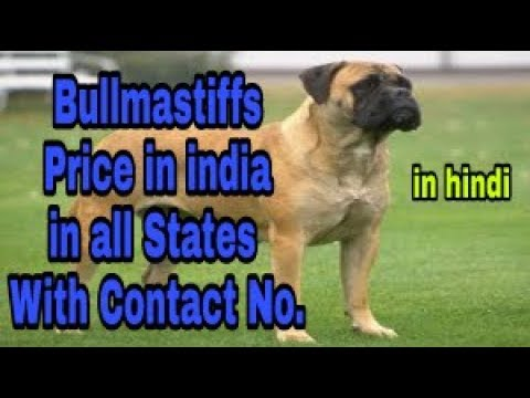 Bullmastiffs  Price in india in all States with Contact No.